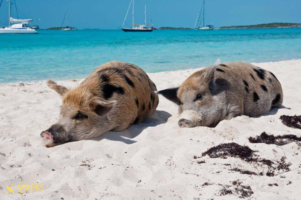 5 лучших мест для отдыха на яхте на Багамах