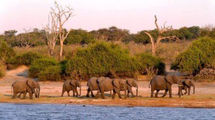 Путешествие в Ботсвану – дикое сафари